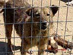 The animals of Romania need help!