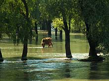 Flooded Danube Delta pasture- Click for more pictures...
